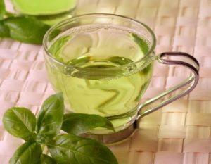 Groene Thee Metabolisme